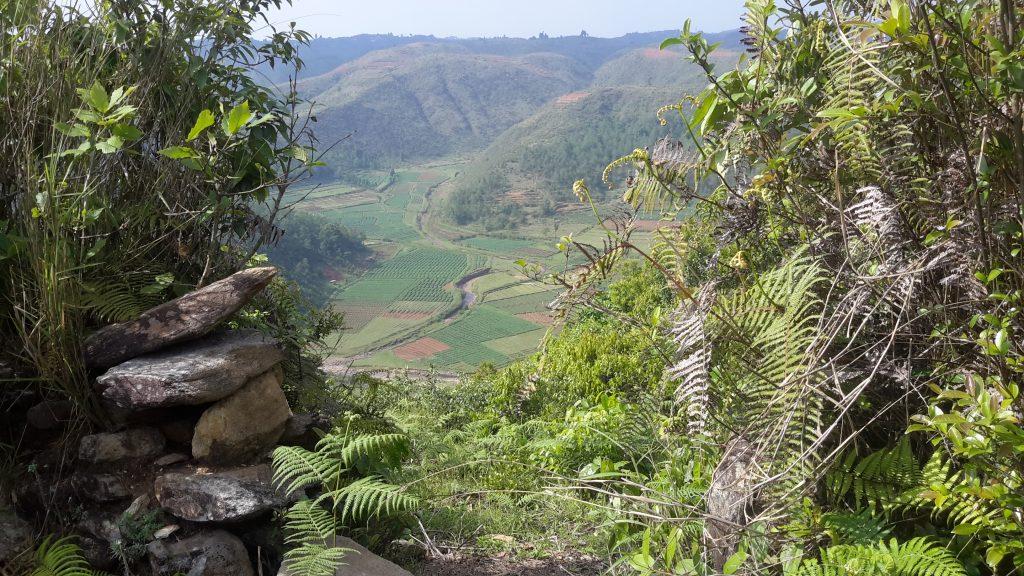 ind_landscape_sacredgrove_48759767991_o