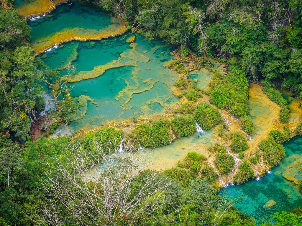 World Rainforest Day 2021 Feature