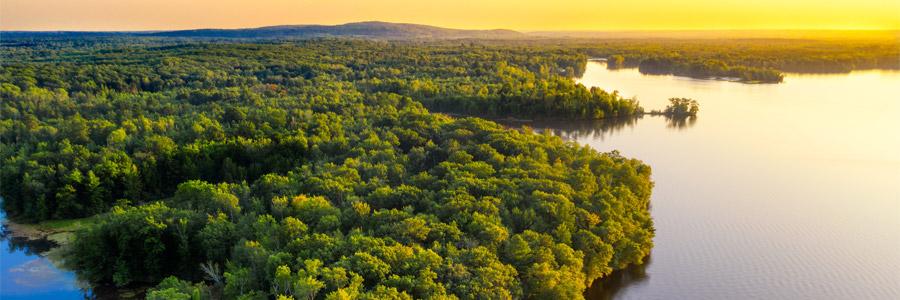 World Rainforest Day 2021