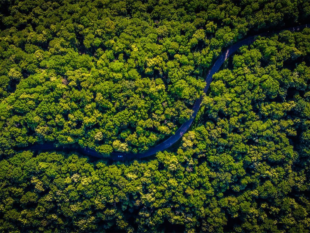 Sustainability project: reducing deforestation in Brazil