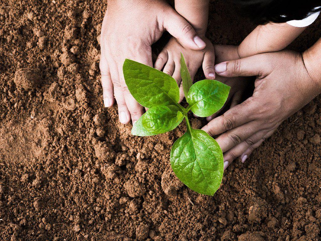 Planting 11 million trees